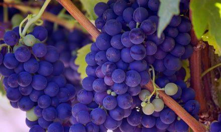 Sunday: Wine